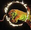 Цирки в Сосновском
