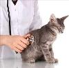 Ветеринарные клиники в Сосновском